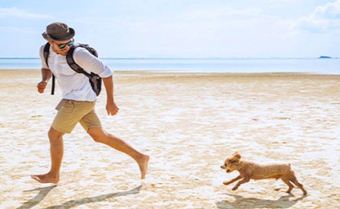 6 Florida Doggy Day Trip Destinations When Traveling by Boat