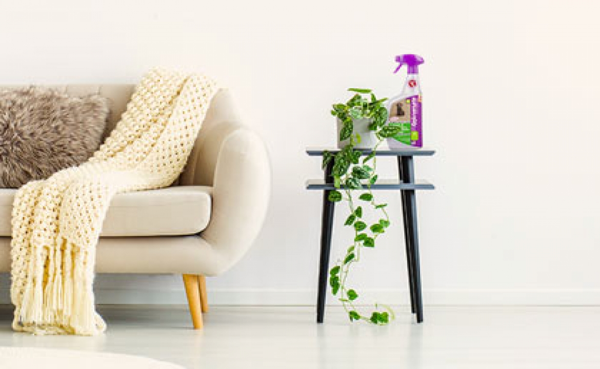 Why Rejuvenate Offers The Best Upholstery Cleaner On The Market