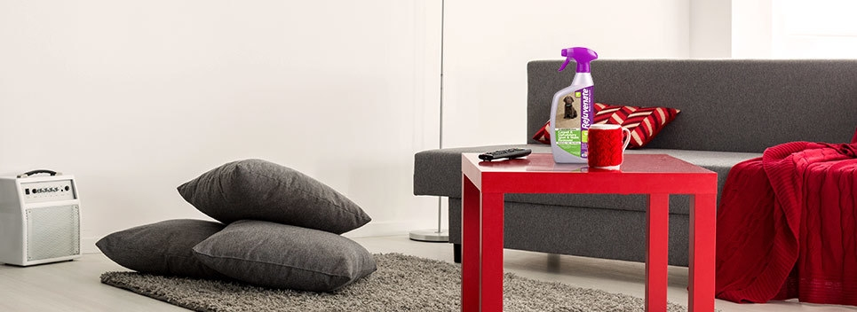 What Is A Couch Cleaner And Do I Even Need One?