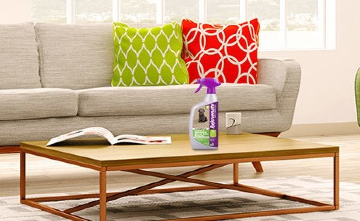 The Best Carpet Cleaning Solution Does More with Rejuvenate